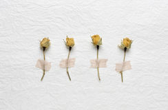 Dried flowers of roses on a white paper. pink. yellow. Dried buds of roses on a white background Royalty Free Stock Photo