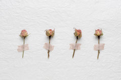 Dried flowers of roses on a white paper. pink. yellow Royalty Free Stock Photos