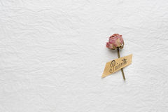 Dried flowers of roses on a white paper. pink. yellow. Dried buds of roses on a white background Royalty Free Stock Images