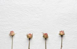 Dried flowers of roses on a white paper. pink. yellow. Dried buds of roses on a white background Stock Photos