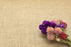 Dried flowers on sacking Stock Image
