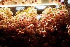 Dried flowers Stock Photography