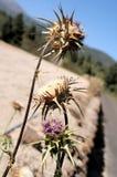 Dried Flowers Stock Photos