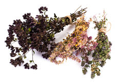 Dried Flowers and Stems of Thyme Royalty Free Stock Photos