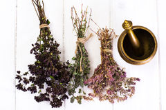 Dried Flowers and Stems of Thyme Stock Image