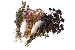Dried Flowers and Stems of Thyme Royalty Free Stock Image