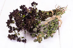 Dried Flowers and Stems of Thyme Royalty Free Stock Images