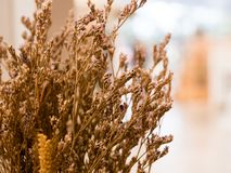 Dried flowers used in home decoration in bokeh bulb behind the s royalty free stock images