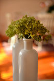 Dried flowers in a vase used for home decoration. Dried flowers in a white vase used for home decoration royalty free stock photo