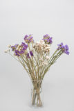 Dried flowers in a vase Royalty Free Stock Photo