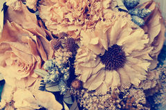 Dried flowers vintage Stock Images