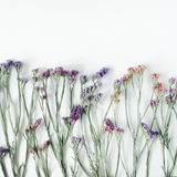 Dried flowers on white background Royalty Free Stock Photo