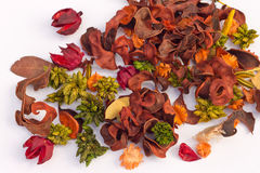 The dried flowers on a white background Stock Photography