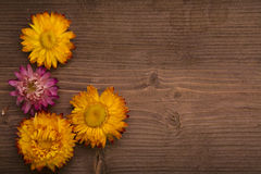 Dried Flowers on wood stock photos