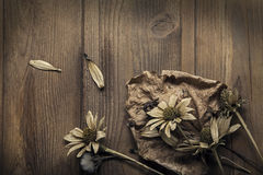 Dried Flowers on  wooden background Autumn Still Life Royalty Free Stock Images