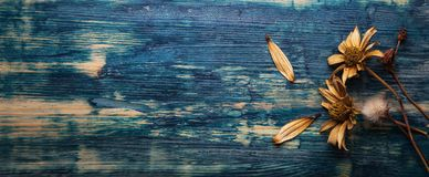 Dried Flowers on a wooden background Autumn Still Life stock photos