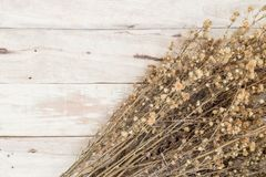 Dried flowers on Wooden royalty free stock photos