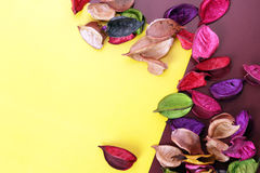 Dried Flowers Stock Image