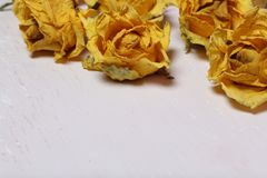 Dried flowers of yellow roses. On an old background with peeling paint stock photos