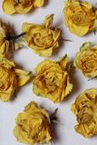 Dried flowers of yellow roses. On an old background with peeling paint royalty free stock photos