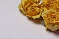 Dried flowers of yellow roses. On an old background with peeling paint stock images