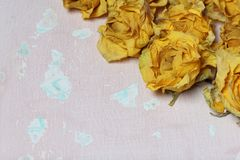Dried flowers of yellow roses. On an old background with peeling paint stock image