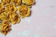 Dried flowers of yellow roses. On an old background with peeling paint royalty free stock photography