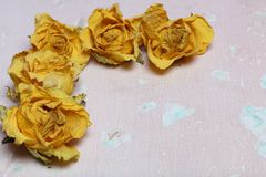 Dried flowers of yellow roses. On an old background with peeling paint stock photo