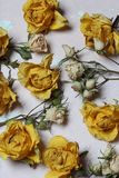 Dried flowers of yellow and white roses. On an old background with peeling paint stock photography