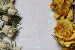 Dried flowers of yellow and white roses. On an old background with peeling paint stock photo