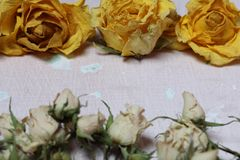 Dried flowers of yellow and white roses. On an old background with peeling paint royalty free stock photo