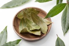 Dried and fresh bay laurel leaves stock image
