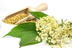 Dried and fresh elder blossoms Stock Images