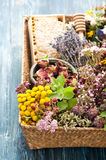 Dried and fresh herbs and flowers in basket and honeycomb. Stock Photos