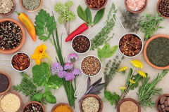 Dried and Fresh Herbs and Spices Royalty Free Stock Photo