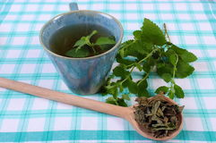 Dried and fresh lemon balm, cup of herbal beverage on tablecloth. Heap of dried and fresh green lemon balm with cup of calming herbal drink on tablecloth Royalty Free Stock Images