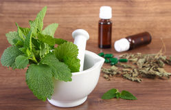 Dried and fresh lemon balm in mortar and medical capsules, choice between pills and alternative medicine Stock Photography