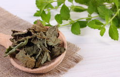 Dried and fresh lemon balm with spoon on white wooden table, herbalism Stock Photos