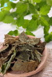 Dried and fresh lemon balm with spoon on white wooden table, herbalism Royalty Free Stock Photo