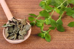 Dried and fresh lemon balm with spoon on wooden table, herbalism Royalty Free Stock Photo