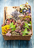 Dried and fresh medicinal herbs. Herbal tea Stock Photo