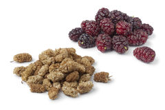 Dried and fresh mulberries Royalty Free Stock Image