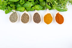 Dried and fresh spices Stock Photo
