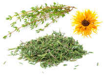 Dried and fresh thyme Stock Image
