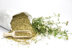 Dried and fresh yarrow on white royalty free stock photos