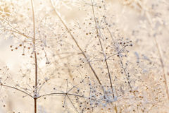 Free Dried Frozen Light Plants At Sunset Royalty Free Stock Photo - 50780275