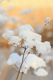 Dried frozen plant shines like a flower Royalty Free Stock Photo