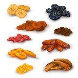 Dried fruit icons set. Sun dried fruit healthy nutritive food icons set with apricots raisins prunes figs abstract isolated vector illustration Royalty Free Stock Photo