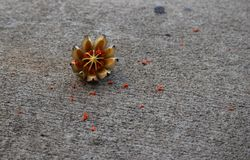 Dried fruit on the sidewalk Royalty Free Stock Photography