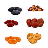 Dried fruits or berries isolated vector icons. Vector icons of dried fruits. Isolated raisins of grape, dates and juicy exotic figs, apricots, plums and black Royalty Free Stock Images